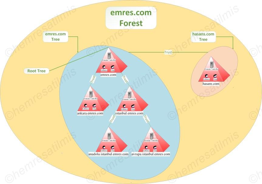 Active Directory'de Forest ve TreeYapısı